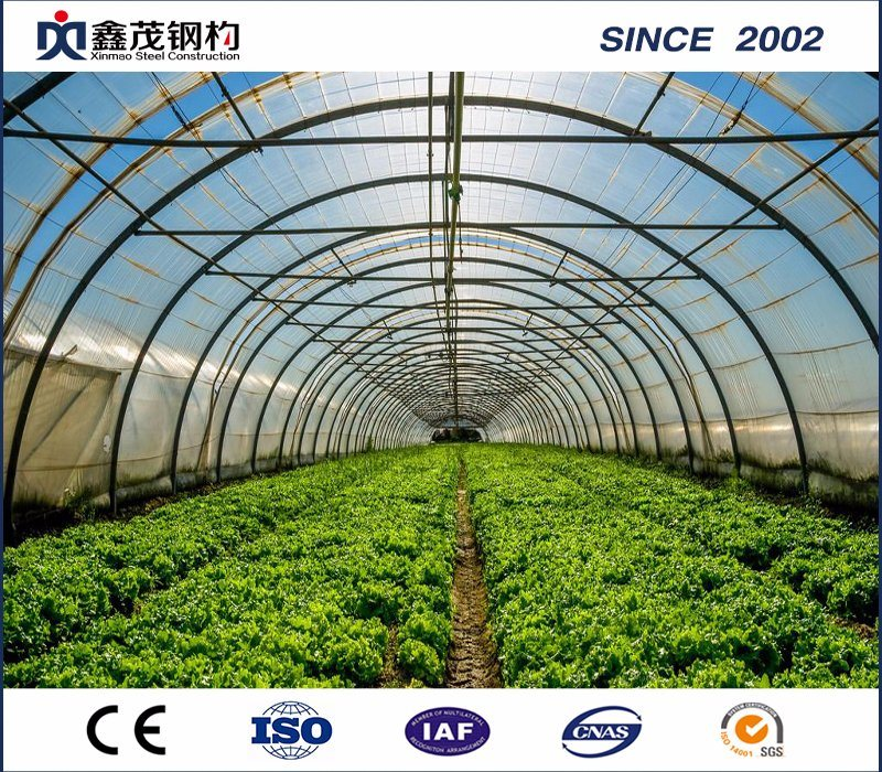 Agricultural Plastic Film Greenhouse for Vegetable and Tomato