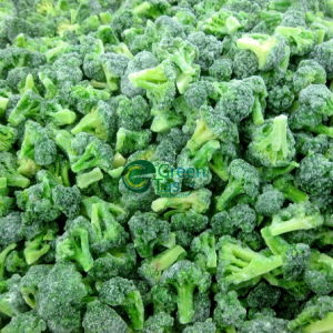 New Crop IQF Broccoli