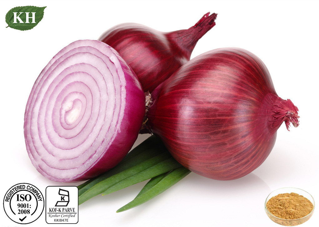 High Quality Onion Extract 10% 40% Quercetin; Spiraoside