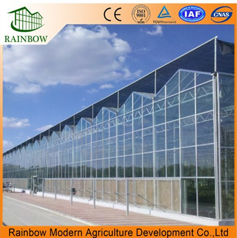Venlo Type Glass Greenhouse for Agriculture