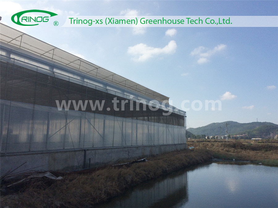 Modern Appearance Multispan Flower Greenhouse
